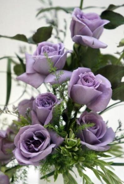 La Rosa U0027Suntoryu0027, La Prima Rosa Blu OGM