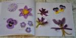 Viola, petunia, lavanda
