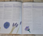 spiegazioni e schemi 2 (fiori azzurri)
