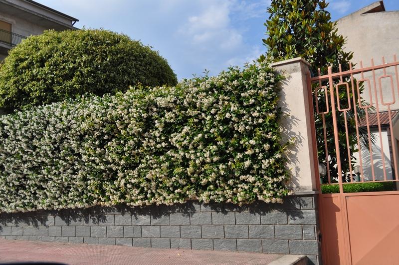 Giardinaggio Irregolare