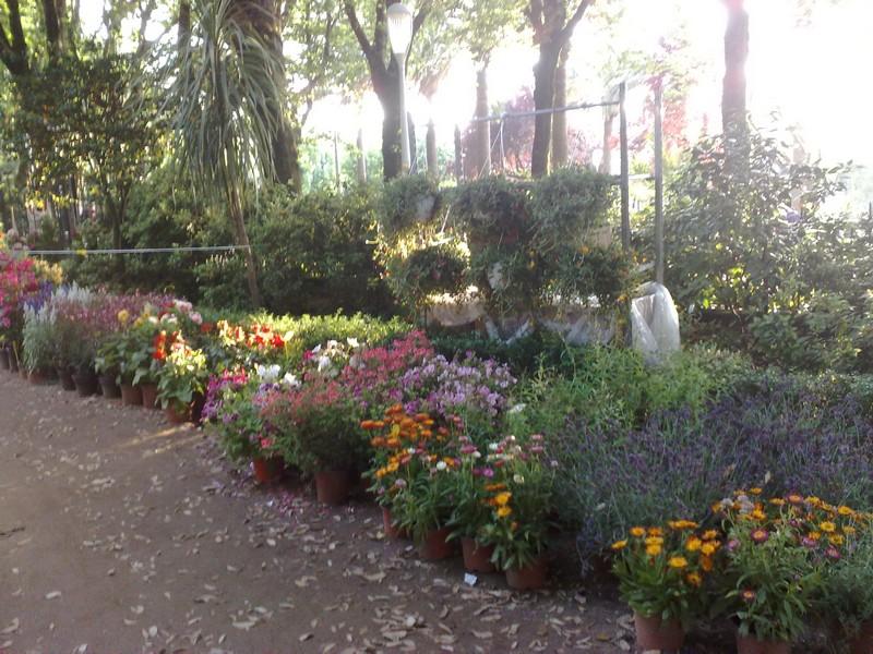 Fiere di giardinaggio giardinaggio irregolare - Fiera giardinaggio ...