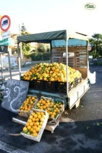 """Non ho dubbi nell'affermare  che per un siciliano l'autunno è la stagione di  inizio della """"Campagna degli agrumi"""". Dunque, foto n. 1:  /'A lapa/ dei tarocchi  di Paternò;"""