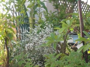 le ho allegate...andrà bene?  be' mi vergogno, la fotografia non è proprio cosa mia, ma sti cavoli !!!  nella  prima l'autunno si vede dai vetri sporchi delle prime piogge, il  mediterraneo si vede dal fatto che col cavolo che apro le finestre ai primi  pseudo freddi( e' quella che non e' piaciuta manco al gatto , ma a me e' l'unica  che piace delle montagne che ne ho fatte!) nella seconda l'autunno si vede dagli allium tuberosum che spenzolano pieni di  semi e il mediterraneo dall'agave attenuata nella terza autunno settembrini mediterraneo plumerie  il fatto e' che sarei dovuta andare in vacanza a casa dei miei nel cilento ,  c'avrei avuto foto piu' giuste.  Vabbe', provo a spedire che so' pippa  se non va questo e' il link all'album su picasa e le foto sono le prime tre. https://picasaweb.google.com/ritafino/Concorso?authuser=0&feat=directlink  Talofa!