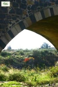 """Può capitare poi, che durante una magnifica giornata  di sole che mi vede  esplorare """"le Forre laviche del fiume Simeto"""" ed il Ponte Saraceno ad esse  vicino, guardando in fondo, dentro il mio obiettivo distingua colori che mi  facciano dire: Perbacco! Ma allora siamo proprio in autunno! (Foto n.3: Sicilia,  … in fondo, siamo in autunno).Detto questo, per dire chi sono vi rimando alla Presentazione  (http://verdeinsiemeweb.blogspot.com/p/presentazione.html del mio blog """"  verdeinsiemeweb"""" che per """"caso o ventura"""" scrivo da un po'di tempo, dalla  lontana Sicilia."""