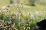 oliveto-lucis (3)