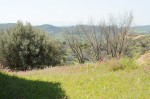 oliveto-lucis (4)