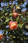 rosa orientale sconosciuta (4)