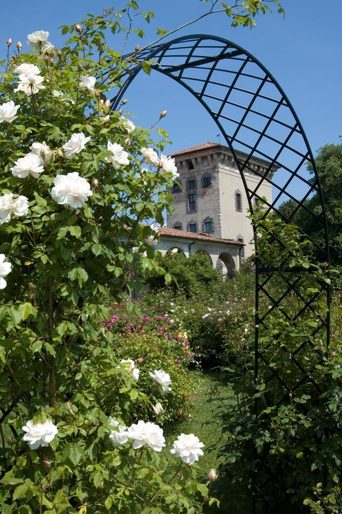 Fiera rose giardinaggio irregolare - Fiera giardinaggio ...