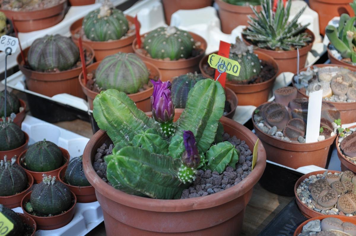 Fiera fiori calabria giardinaggio irregolare - Fiera giardinaggio ...