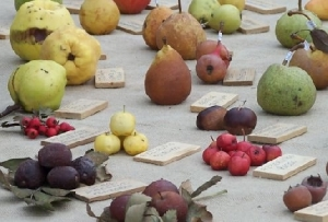 http://www.corrierenazionale.it/tempo-libero/appuntamenti/26369-pomarium-e-la-frutta-antica-ritorna-sulle-nostre-tavole
