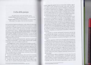 elogio delle vagabonde_erba delle pampas