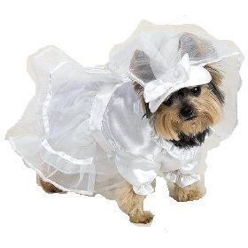 cane da sposa
