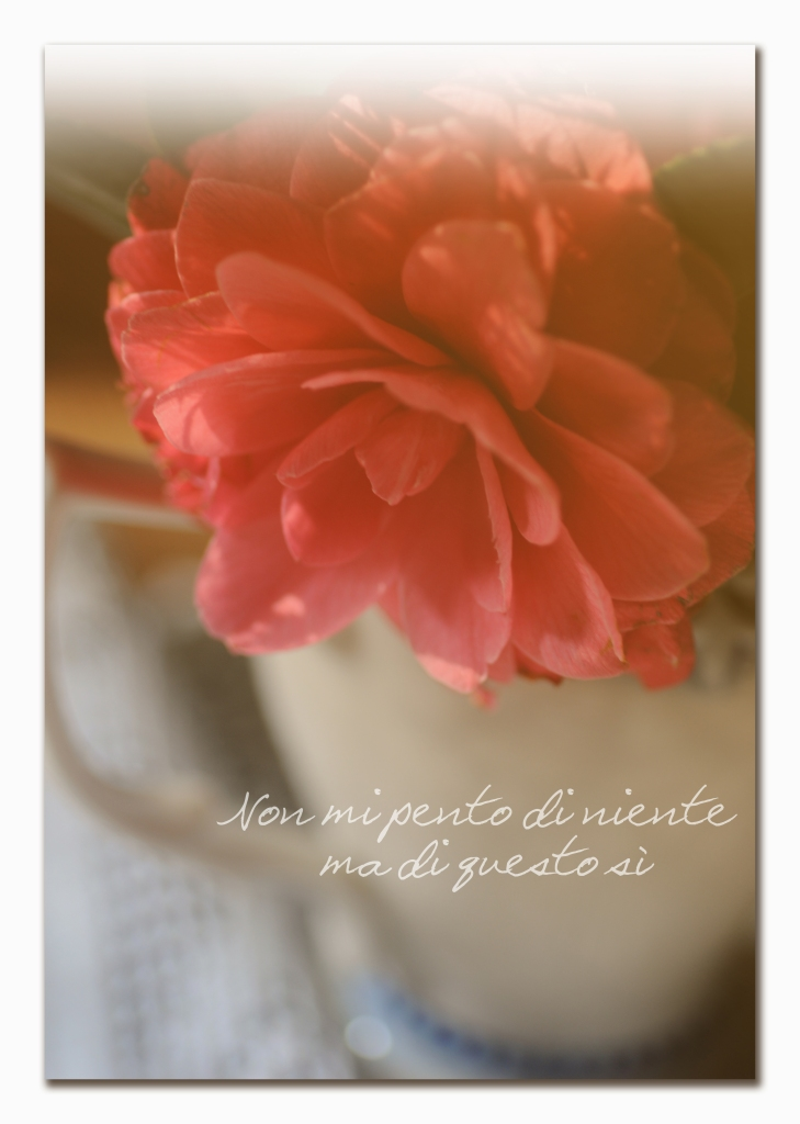 camelia flower_vintage