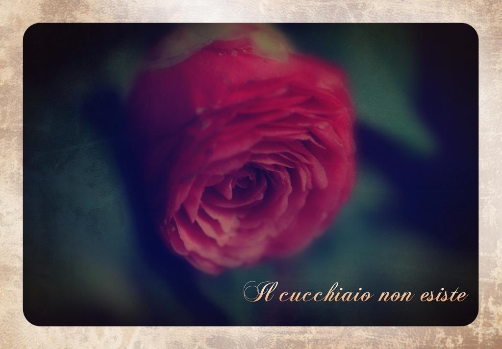 camelia flower_vintage_lomo