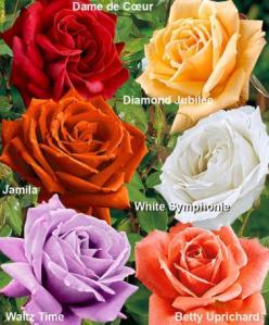 rose bakker