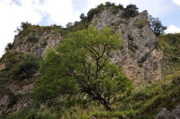 Agnana (2)