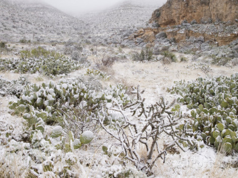 http://imgc.allpostersimages.com/images/P-473-488-90/38/3816/F7BYF00Z/posters/clint-farlinger-snow-in-walnut-canyon-guadalupe-mountains-carlsbad-caverns-national-park-new-mexico-usa.jpg