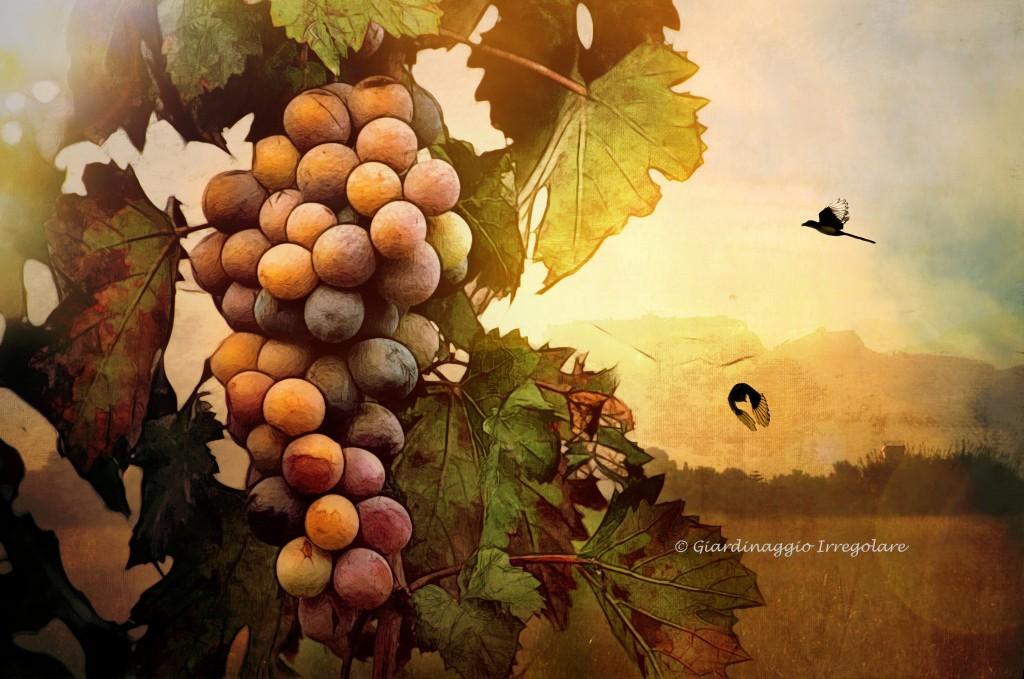 grape_magpies_fall