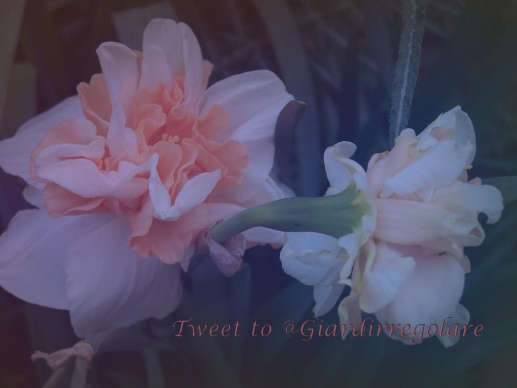 tweet to giardirregolare1