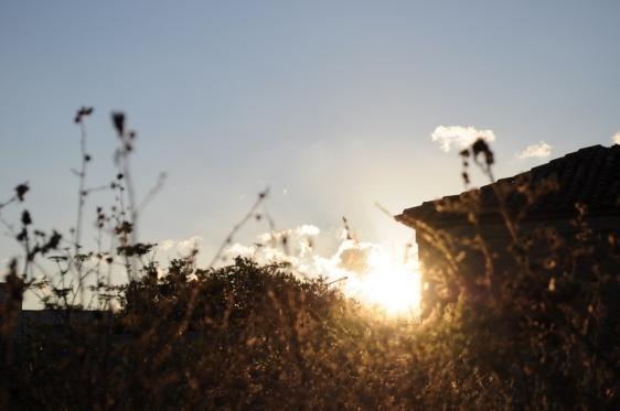 la luce che si mangia l'erba