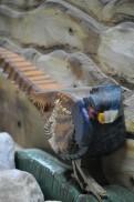 38sculture animali legno nicola sacco