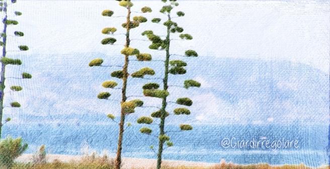 agavi