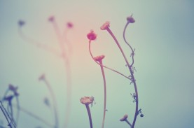 instagramserie2inverno1