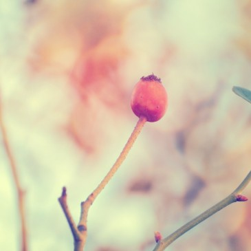 instagramserie2inverno2