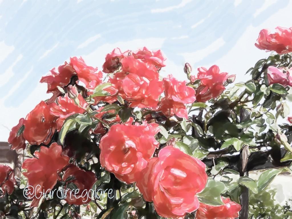 rose-rose-per-te