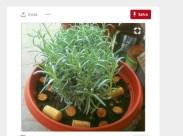 giardino_pandora14